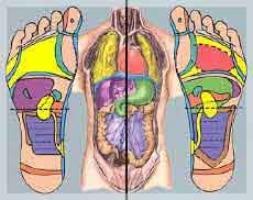 Représentation du corps humain
